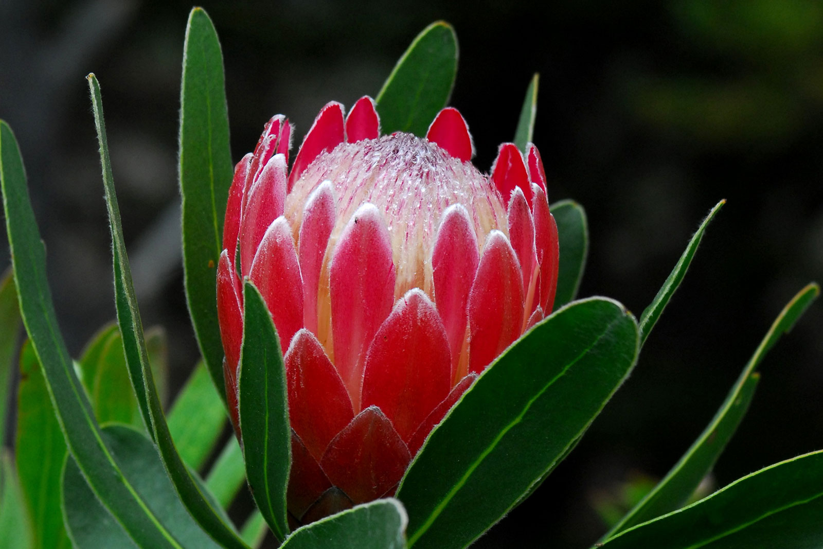 Project Protea